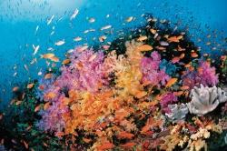 Tauchreisen: Erlebnisse unter Wasser