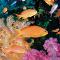 Tauchreisen: Erlebnisse unter Wasser - Vorschau