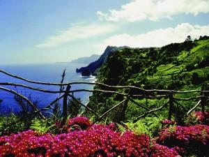 Blumenpracht auf Madeira