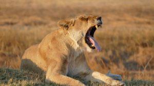 Die besten Safari-Ziele in Afrika